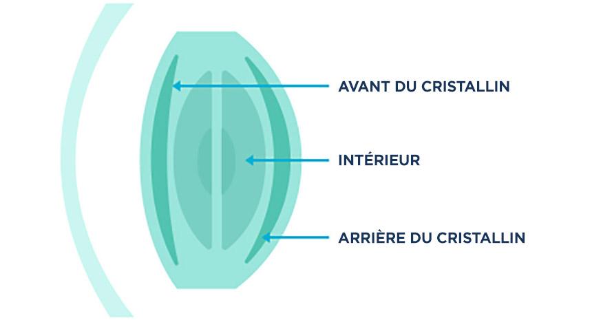 Schéma montrant l'avant, l'intérieur et l'arrière d'un cristallin